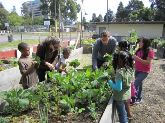 Community Gardening - Oakland - California - USA