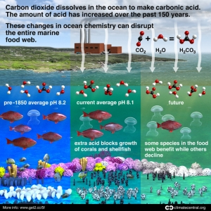 Effects of Ocean Acidification on Marine Life