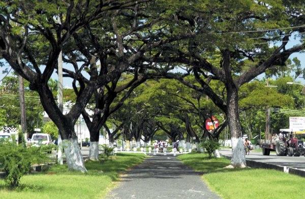 Avenue in Georgetown - Guyana