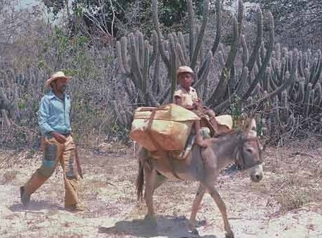 Boy on donkey carrying water - Sertao - Northeast Brazil (2)