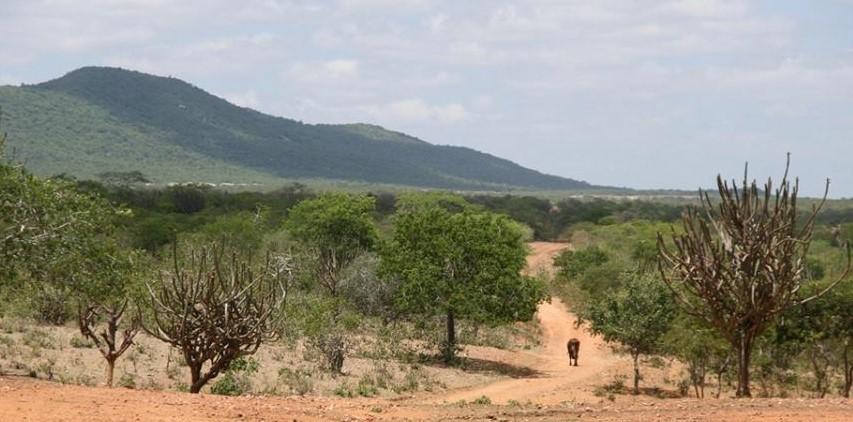 Sertao Nordestino - Northeast Brazil (2)